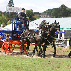 Mary Fuller driving her Canadian Percherons, Manny and Dizzy<br /> Groom - Emma Scotney