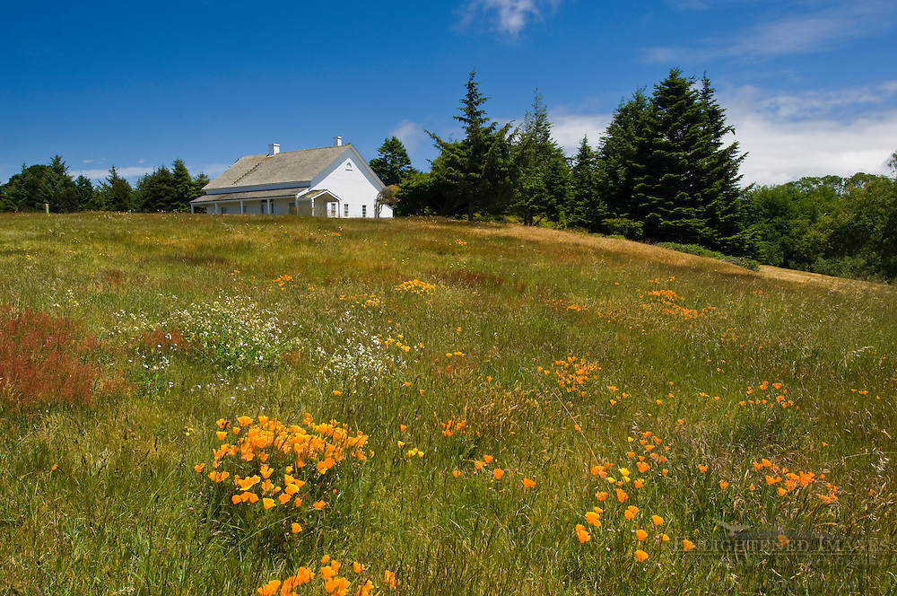 Wildflowers in Spring at Fort Humboldt State Historic Park, Eureka, California