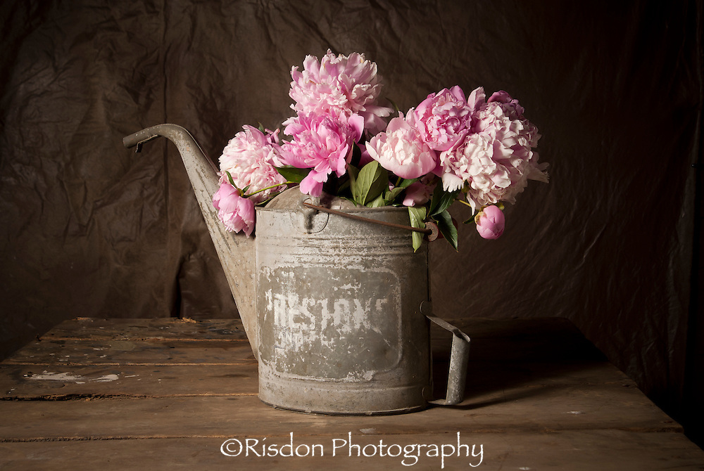 Still life pink peonies in rustic watering can