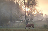 Gardiner, New York - A horse grazes in a field as the sun starts to burn off morning fog on Sept. 28, 2014.