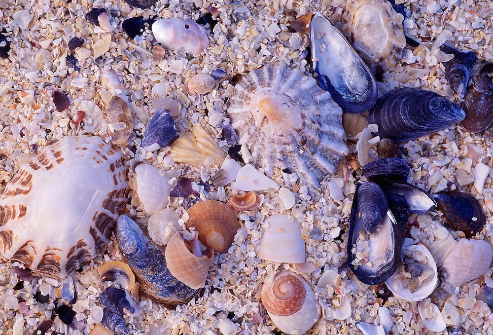 Shell sand; Sandray