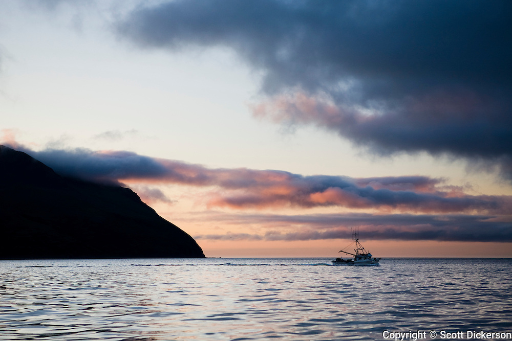A commercial salmon fishing gillnet boat motors nearby King Cove Alaska at sunset, Alaska Peninsula, Alaska