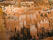 Sunset light strikes orange and white hoodoos in Bryce National Park, Utah, USA. Bryce is actually not a canyon but a giant natural amphitheater created by erosion along the eastern side of the Paunsaugunt Plateau. The ancient river and lake bed sedimentary rocks erode into hoodoos by the force of wind, water, and ice.