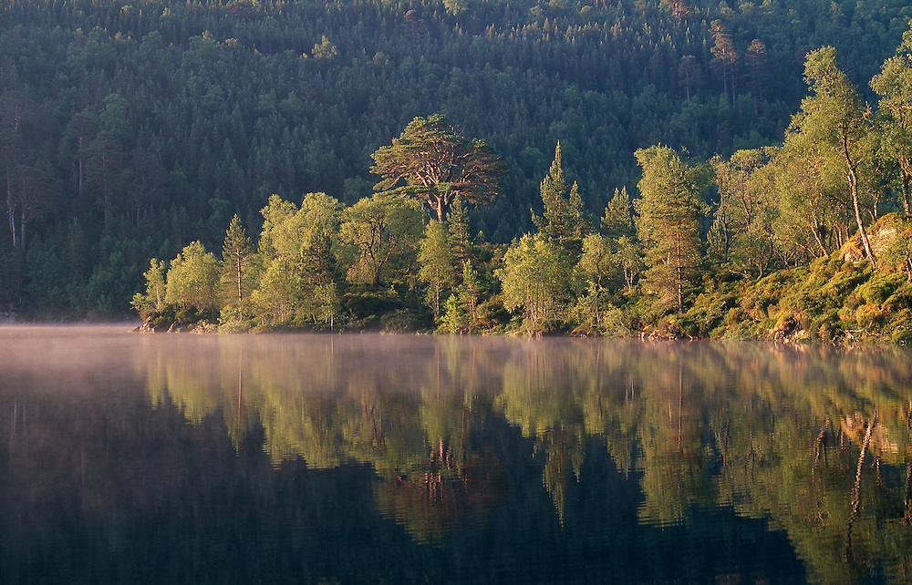 Scots pine and birch, Glen Affric, Scotland