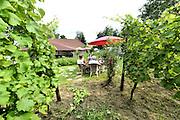 Nederland, Groesbeek, 26-7-2016Op wijngaard de colonjes leidt initiator van de wijnfeesten Freek Verhoeven de belangstellenden rond langs zijn wijnranken. Groesbeek wil zich manifesteren als nationaal wijndorp en een voortrekkersrol spelen in de nederlandse wijncultuur omdat het diverse wijngaarden huisvest. In groesbeek national wine festivals are held. Part of this was the grape grinding, with bare feet stamping of the grapes. Groesbeek wants a leading role in the Dutch wine culture because it houses various vineyards. À Groesbeek vin festivals nationaux sont organisés. Une partie de ce raisin a été le meulage, pieds nus estampillage des raisins. Groesbeek veut un rôle de premier plan dans la culture du vin hollandais car il abrite différents vignobles. Foto: Flip Franssen