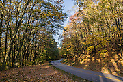 Fall leaves turn yellow, orange, and red along the Blue Ridge Parkway, in Virginia, in the Blue Ridge Mountains (a subset of the Appalachian Mountains), USA. This photo is between Mileposts 25-35 of the Blue Ridge Parkway. The scenic 469-mile Blue Ridge Parkway was built 1935-1987 to aesthetically connect Shenandoah National Park (in Virginia) with Great Smoky Mountains National Park in North Carolina, following crestlines and the Appalachian Trail.