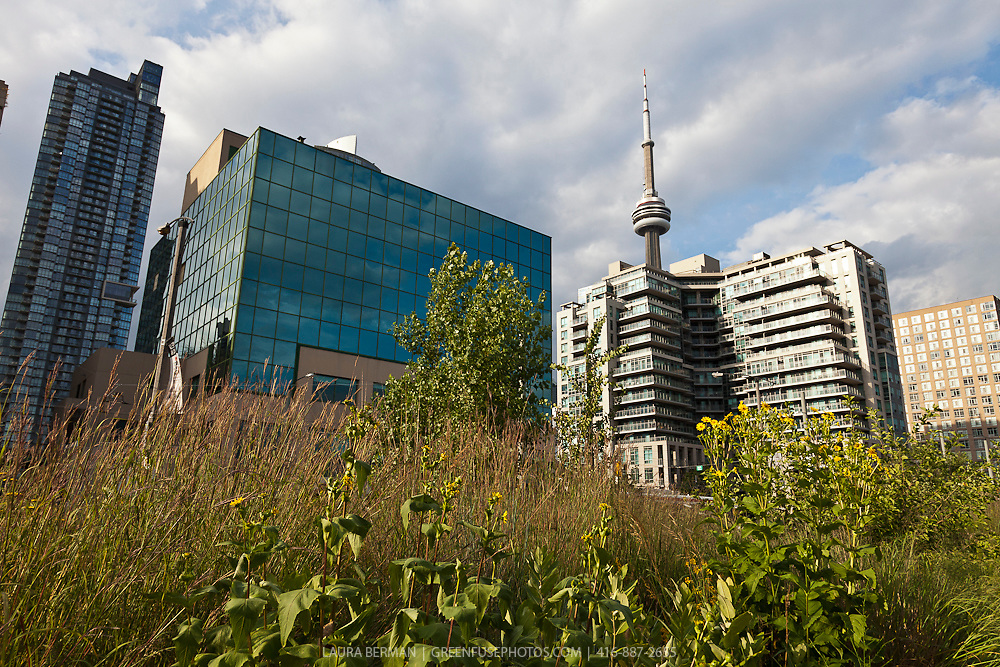Landscaping with native plants in downtown Toronto