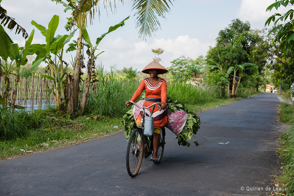 A local woman with vegetables on bicycle. Located near Merapi, central Java.