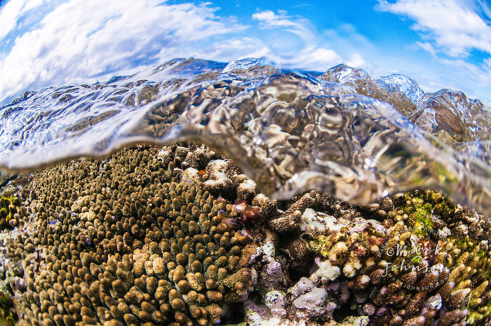Below and above split level view of a coral reef, Lady Elliot Island, Great Barrier Reef, Queensland, Australia