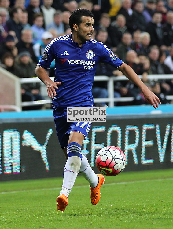 Newcastle United v Chelsea English Premiership 26 September 2015; Pedro (Chelsea, 17) during the Newcastle v Chelsea English Premiership match played at St. James' Park, Newcastle; <br /> <br /> &copy; Chris McCluskie | SportPix.org.uk
