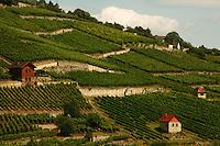 21 Jul 2009, near Freyburg, Germany --- Vineyards near the town of Freyburg, in the former East Germany, in the state of Saxony-Anhalt. --- Image by © Owen Franken/Corbis