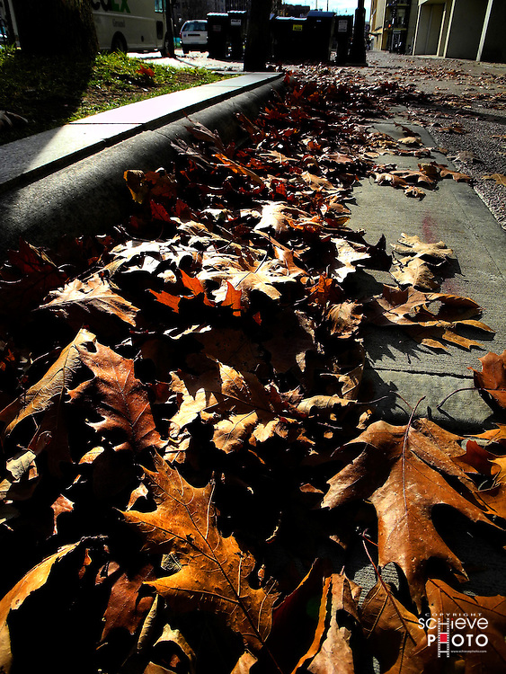 Leaves on a city sidewalk.