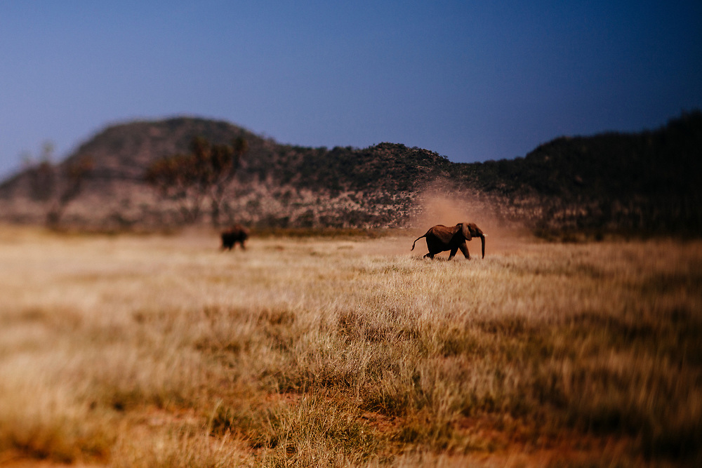 Elephants on the open plains of Kenya.