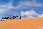 Bactrian camels (Camels bactrians) & nomads<br /> Moltsog Els<br /> Gobi Desert<br /> Mongolia