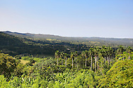 Lomas de Galindo near Corral Nuevo, Matanzas, Cuba.