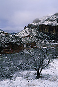 Snow-covered trees in Salt River Canyon, Fort Apache Indian Reservation, Arizona