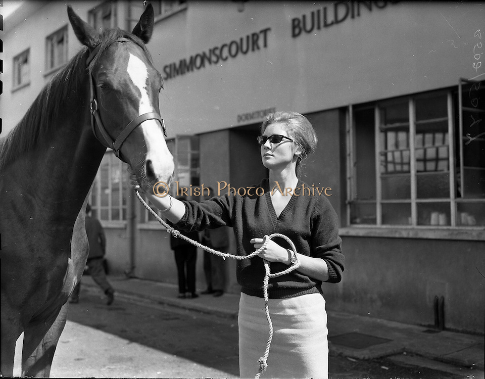 01/08/1960<br /> 08/01/1960<br /> 01 August 1960<br /> R.D.S Horse Show Dublin (Monday). Miss Caroline Cotton with her father's yearling arriving at the Dublin Horse show.
