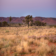 MacDonnell Ranges at sunset