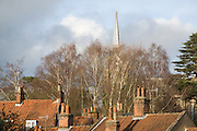 Church spire rising above silver birch trees and rooftops, Woodbridge, Suffolk, England
