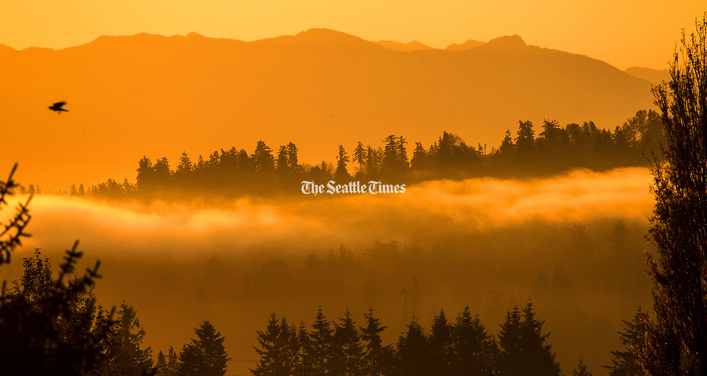 The Cascade Mountains loom above a bank of fog over the north end of Lake Washington in Kenmore. (Mike Siegel / The Seattle Times)