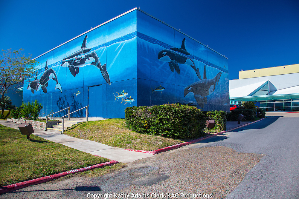 """The Whaling Wall, on three sides of the South Padre Island Convention Centre, was painted by artist Robert Wyland.  This artword was  Wyland's Whaling Wall #53 an is titled  """"Orcas off the Gulf of Mexico''."""