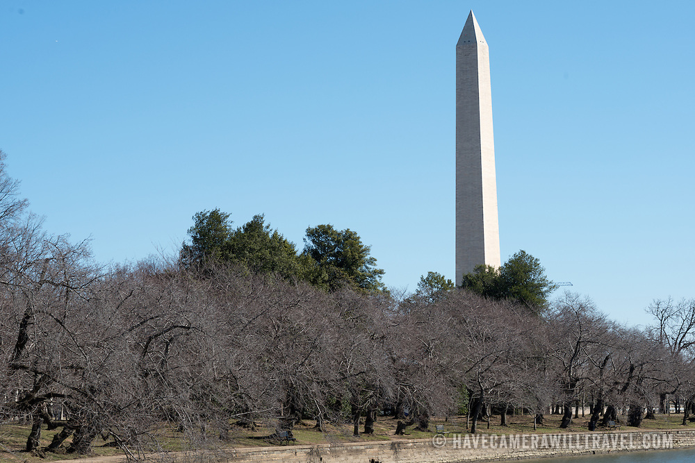 Each spring about 1,700 cherry trees around the Tidal Basin bloom in a colorful but brief floral display that brings large numbers of visitors to the region.