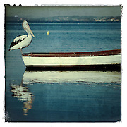 Pelican waiting on Rowboat, Lake Macquarie, Australia