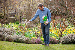 Feeding a lawn with granular lawn feed fertiliser in spring