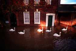 Swans swim past offices in the centre of Worcester flooded by the River Severn, England, UK.