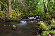 Trout Lake Creek in the rainforest at Sasquatch Provincial Park near Harrison Hot Springs, British Columbia, Canada