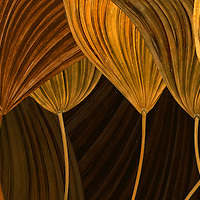 Dried raful palm leafs