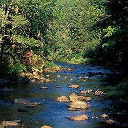 Maidstone, VT.Paul Stream, home of native brook trout, several miles upstream from the Connecticut River.  Northern Forest.