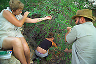 KLASERIE PRIVATE GAME RESERVE, SOUTH AFRICA, DECEMBER 2004. If you get stuck in the 'waitawhile', don't move and let other people free you from the tiny thorns. Wildlife guide Gary Freeman takes people on walking safaris in the bush. Photo by Frits Meyst/Adventure4ever.com