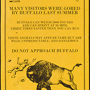 """Many visitors were gored by buffalo last summer..."""