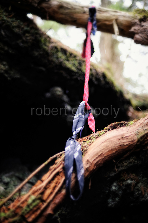 A noose made from neckties hangs from the branch of  a tree in Aokigahara Jukai, better known as the Mt. Fuji suicide forest, which is located at the base of Japan's famed mountain west of Tokyo, Japan. ...