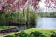 L'Yonne à Champs sur Yonne, Bourgogne, France