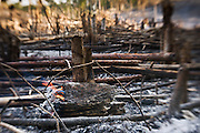 Burned  tropical forest in Guatemala