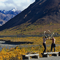 A pair of visitors to Denali National Park, Alaska, pretend to fight with caribou antlers.  The park, which is only accessible via an unpaved road, does not allow people to drive in.  Instead, trained bus drivers carry tourists through the park, which is home to Mt. McKinley.
