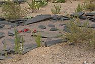 Wüstengarten im Botanischen Garten