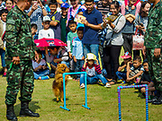 """13 JANUARY 2018 - BANGKOK, THAILAND:      A Thai soldier shows off his dog during Children's Day activities at the Royal Thai Army's King's Guard 2nd Cavalry Camp in central Bangkok. Children's Day is called """"Wan Dek"""" in Thai. Many government offices and military bases hold special activities for children as do shopping malls.  PHOTO BY JACK KURTZ"""
