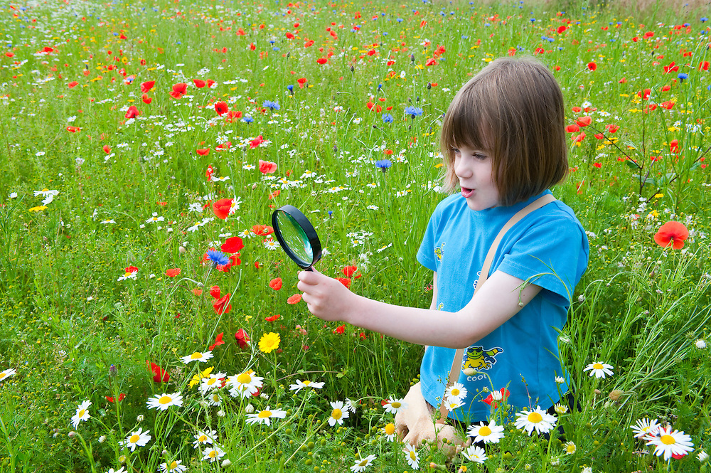 Young girl in a wildflower meadow, holding a magnifying glass, Scotland