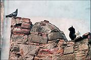 Spanje, Barcelona,10-1-2004Witte en zwarte poes zien in een duif een lekker hapje.Dieren, instinct, jagen, jacht, geduld, dierlijk gedrag, poezen, vogel, voedsel. De duif ontsnapte.Associatie durfinvesteerders,hedgefundsFoto: Flip Franssen
