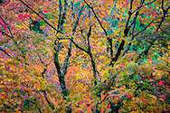 tree in fall color