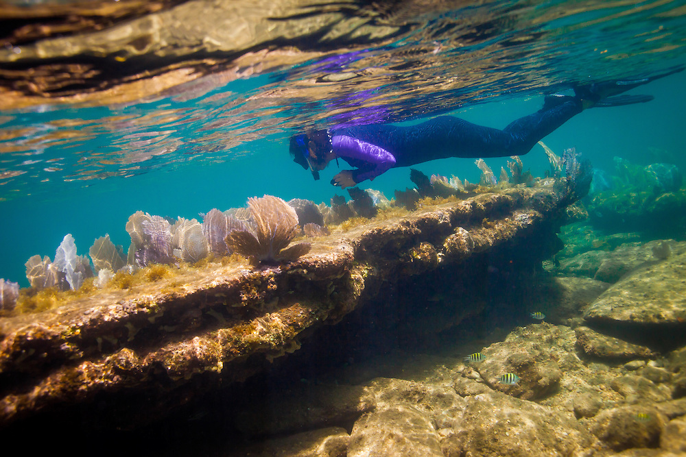 CAYOS CHOCHINOS, HONDURAS -- July 2015 -- Students from New College of Florida study the coral reefs surrounding Cayos Cochinos in Honduras during a five-week summer course taught by Professor Sandra Gilchrist at the Turtle Bay Eco Resort.  (PHOTO / CHIP LITHERLAND)