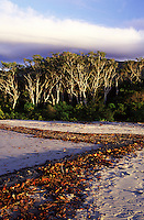 A pattern of leaves formed along the shore of Noah Creek with a stand of Melaleuca Gum trees in the distance.