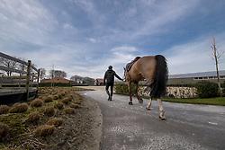 Vernaet Frédéric, Stal T&L<br /> Stal T&L - Heikant 2017<br /> © Hippo Foto - Dirk Caremans<br /> 13/03/17