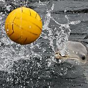 NLD/Harderwijk/20100320 - Opening nieuwe Dolfinarium seizoen met nieuwe show,
