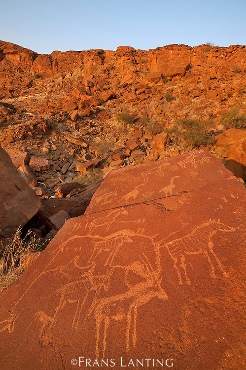 Rock art engravings, Twyfelfontein World Heritage Site, Aba Huab Conservancy, Damaraland, Namibia
