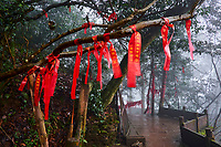 Chine, Province du Sichuan, Mingshan, montagne de Mengding où le moine taoiste Wu Lizhen planta les premiers arbres à thé  // China, Sichuan province, Mingshan, Mengding mountain where Wu Lizhen, the first know grower of tea