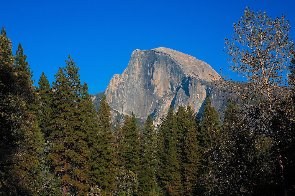 Half Dome And Pines - Merced River Bridge View - Yosemite